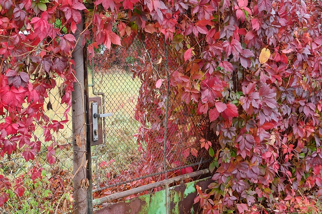 zarostlý plot